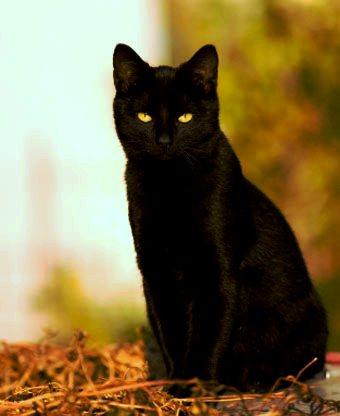 ptáky v černé kočičce